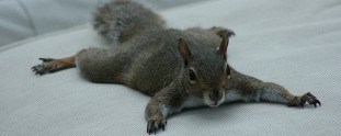 9 of the Laziest Suntanning Squirrels