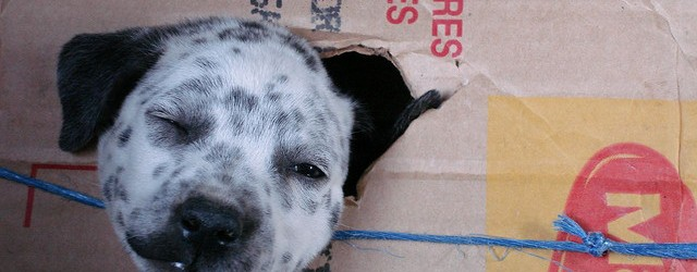 The Safety Box: Puppies and Boxes