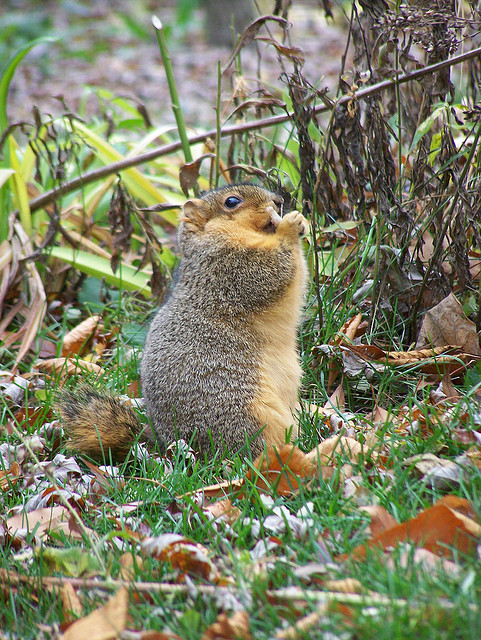 12 Adorably Overweight Squirrels