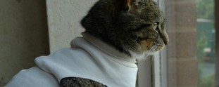 Feline Fashions: Cats in Shirts