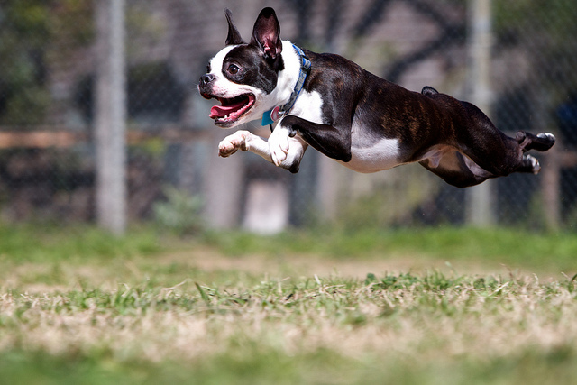12 More Ridiculous Looking Hoverdogs