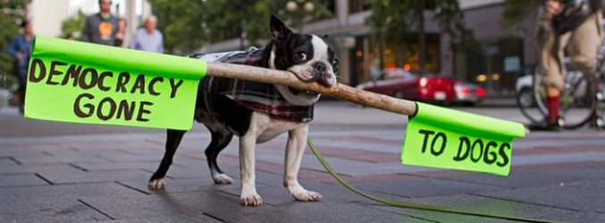 Occupy Wall Street: Dog Edition