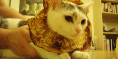 """Inbred"" Animals: 24 Cats Trapped in Bread"