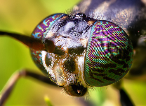 macro-insect-close-ups-wildammo (9)