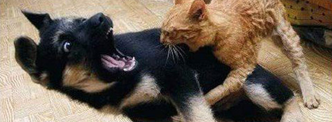 22 Ferocious Animals Engaged in Amusing Combat