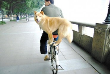 24-pets-riding-with-their-owner-like-a-boss-wildammo (14)