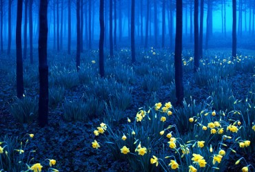 The world is full of amazing places to visit. Here we have 21 that are just completely surreal... Starting of with: Black Forest, Germany