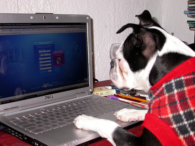 cute-animals-using-computers-wildammo-t (1)