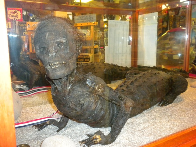 Jake the Alligator Man: Some speculate that this mutant might be a distant ancestor of man. Other theories claim that it was an early, secret genetically engineering project-gone-wrong and wild. Others say he is the corpses of two separate animals stitched together to attract tourists at March's Museum in Long Beach, Washington. It's anyone's guess.