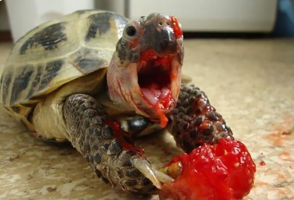 Horrifying Movie Monsters... Actually Just Animals Eating Berries LOL (13)